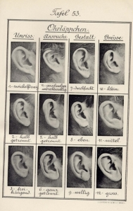 Ohrenform_Bertillonage